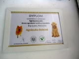 12 szkolenie nt. agresji psow