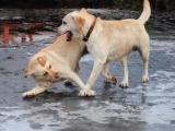 psie szaleństwa i czułości