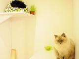 koci pokój - ładny, praktyczny i wygodny