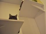 półeczki dają kotom ciekawe perspektywy